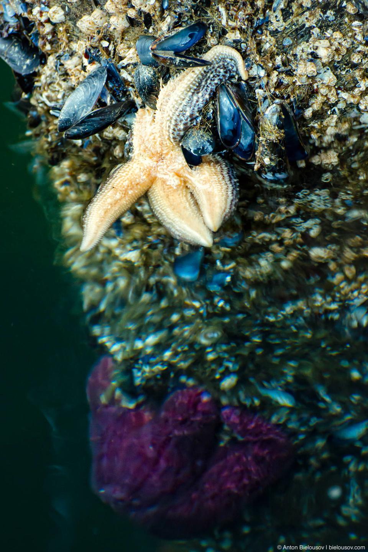 В Horseshoe Bay — одно из лучших мест в мире для снорклинга в холодной воде и неплохой дайвинг: морские звезды любоых цветов и форм здесь облепили все опоры пирса.