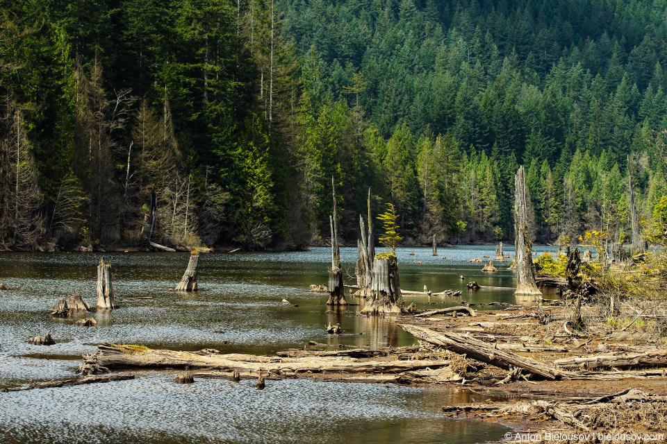 Marsh area near the southern end of Buntzen Lake